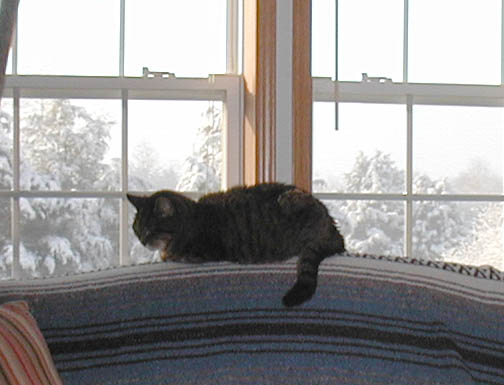 Maybe one of my favorite photos of the old gentle cat. Tinker napping as the sunlight breaks through the clouds at the end of a winter snowstorm.