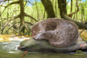Asian Fishing Cat Color Study
